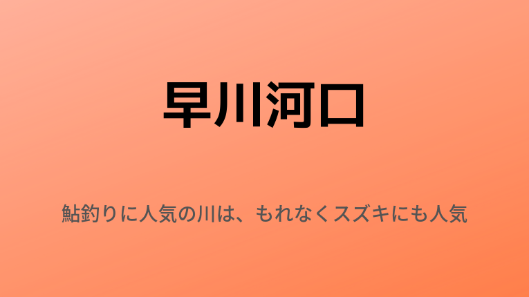 早川河口:鮎釣りに人気の川は、もれなくスズキにも人気です!